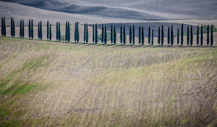 Row - Max Barattini | PHOTO