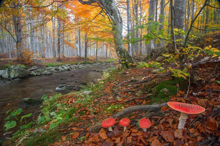 Colors of autumn - Max Barattini | PHOTO
