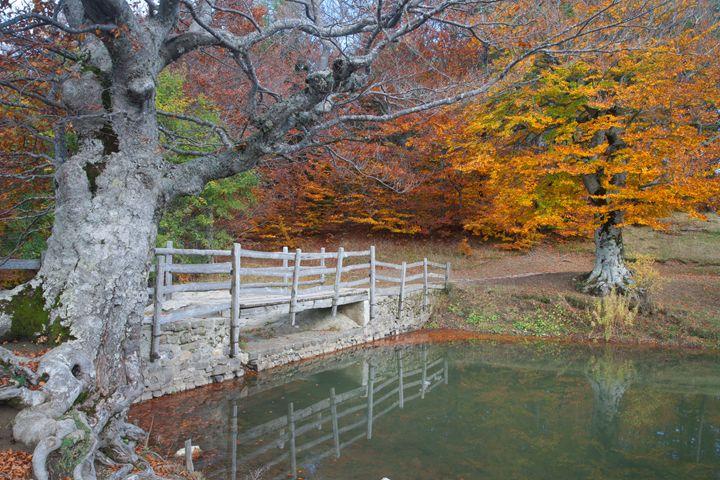 Autumn - Max Barattini | PHOTO