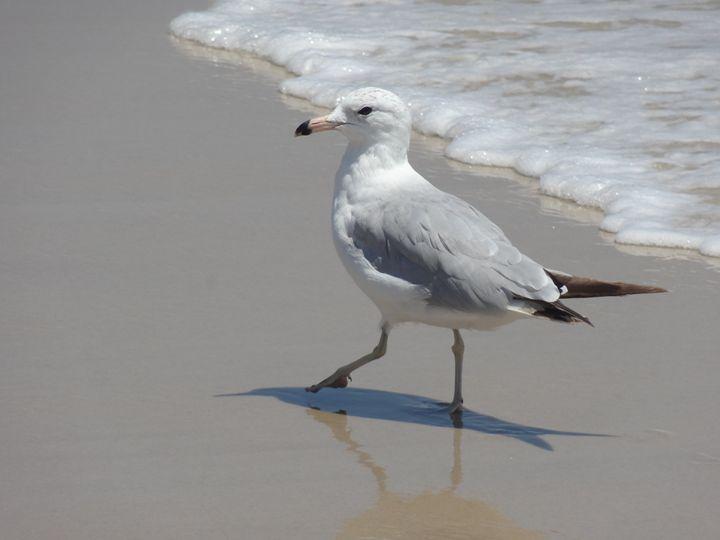 Ocean Seagull - Rice Photography
