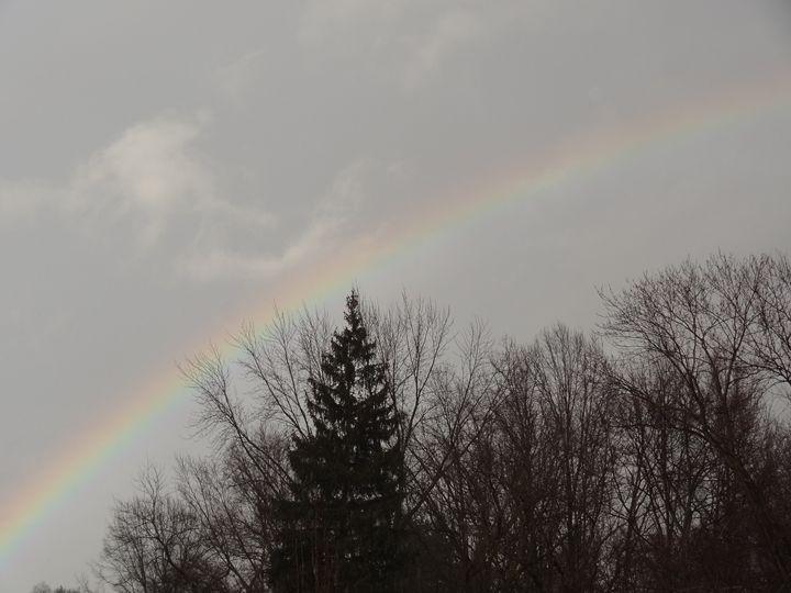 Rainbow in gray sky over trees - Rice Photography