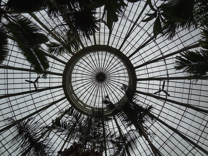 Palm Trees Under Glass Dome Roof - Rice Photography