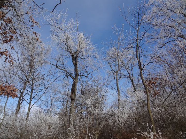 Frost on Winter Trees - Rice Photography