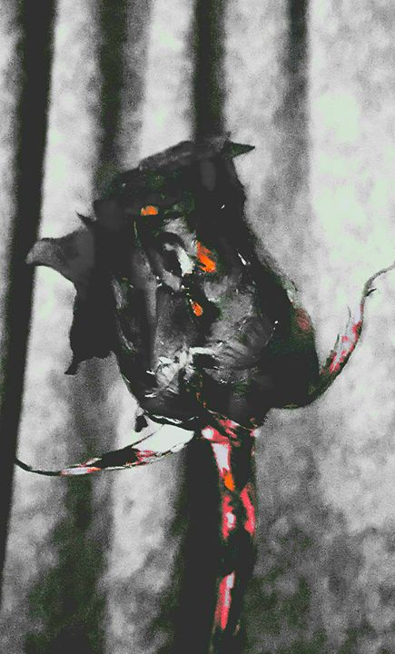 Dark Rose - StyleZ