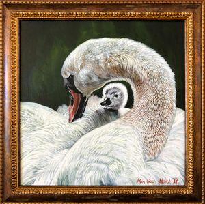 Swan Mum and Baby