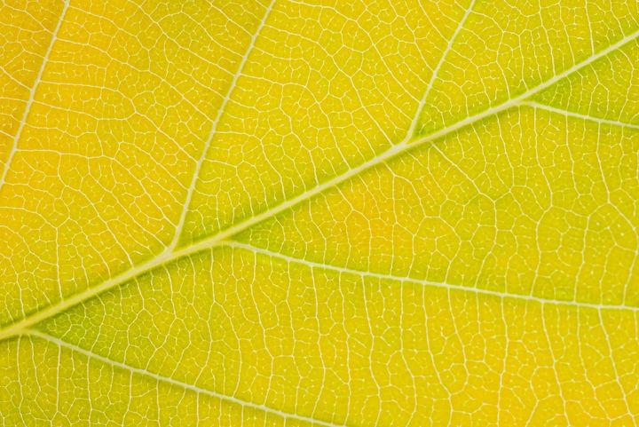 Autumn Leaf - Philippe Monthoux