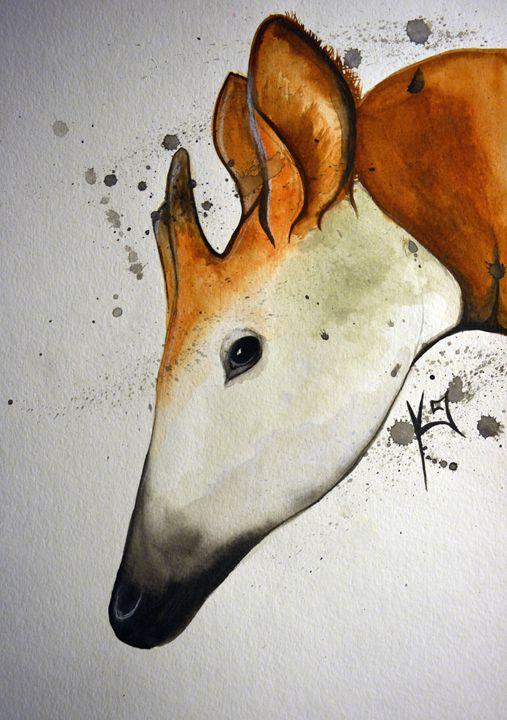 Okapia johnstoni - Itsredribbon