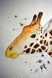 Giraffa c. reticulata