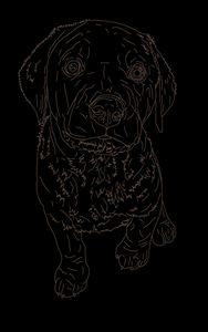 Chocolate Labrador - Kortenay's Gallery