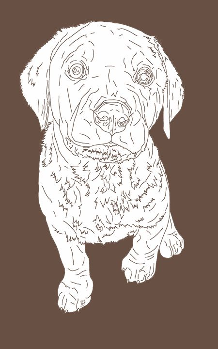 Chocolate Labrador Retriever - Kortenay's Gallery