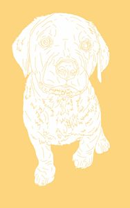 Yellow Labrador Retriever - Kortenay's Gallery