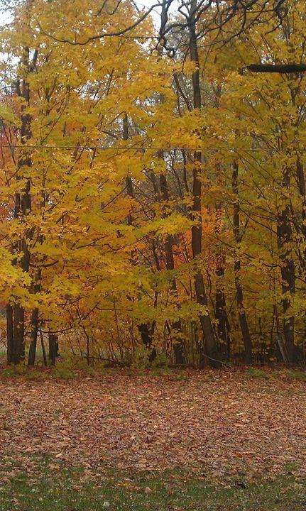 Autumn Trees - Kortenay's Gallery