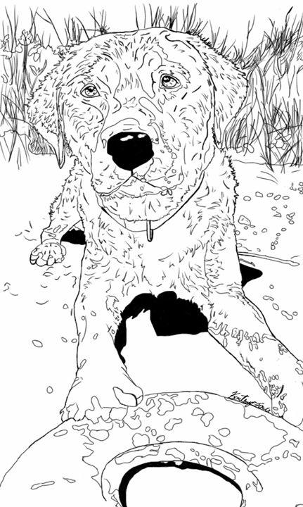 Black Labrador Retriever - Kortenay's Gallery