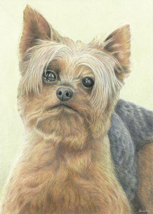 Silky Terrier Portrait - Melissa White (Easelartworx)