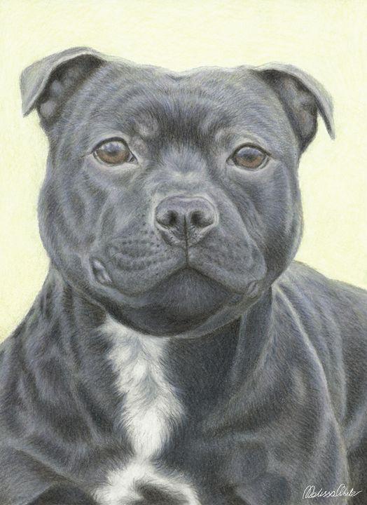 Staffordshire Bull Terrier Portrait - Melissa White (Easelartworx)