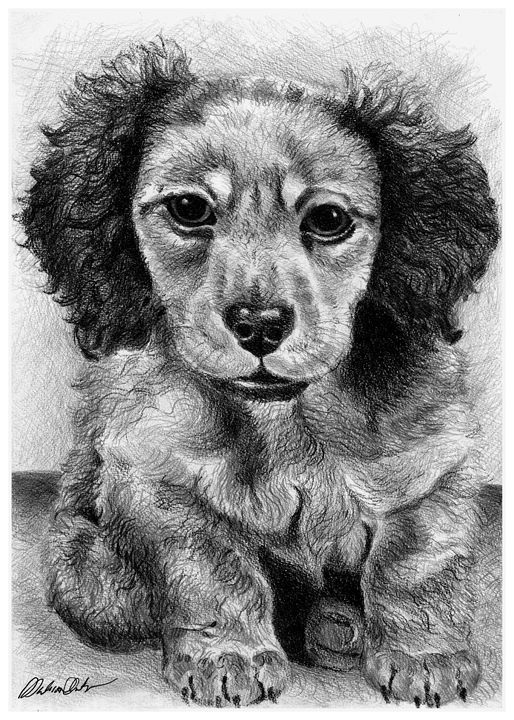 Dachshund Puppy - Melissa White (Easelartworx)