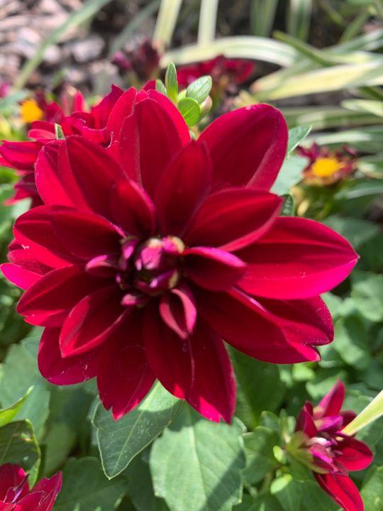 Red Flower - Rinky