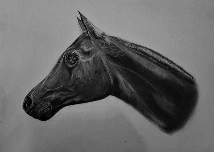 horse - HananK
