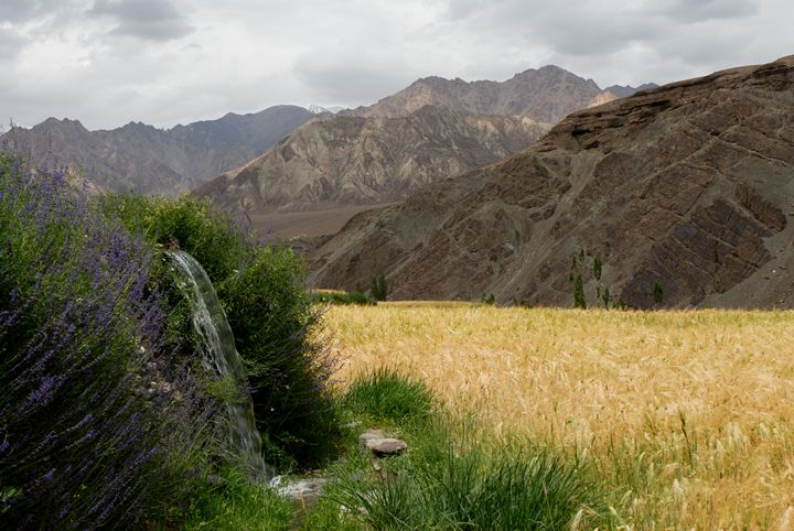 idyllic landscape in the himalayas - easywind