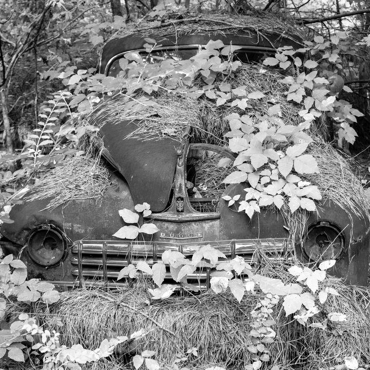 Old Car - Patrick Dezothez