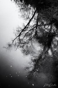 Black and white dream