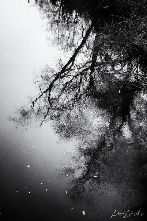Black and white dream - Patrick Dezothez