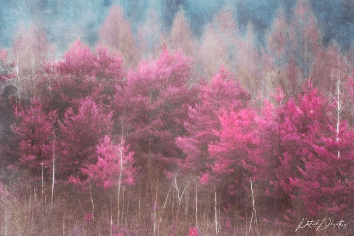 Fantasy in infrared - Patrick Dezothez