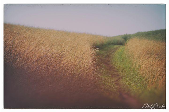 Vintage meadow - Patrick Dezothez