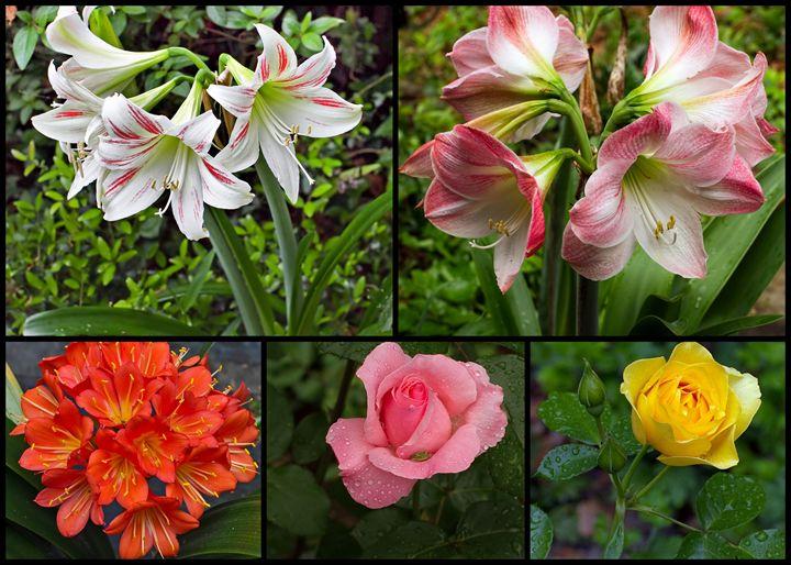 Spring Collage - Farols Fotos