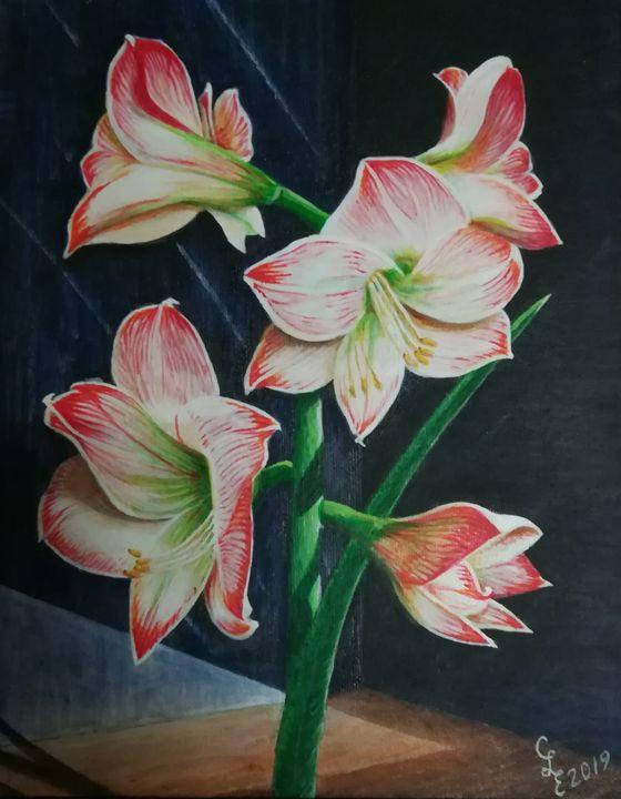 Basking Apple Blossom Amaryllis - Chris Cross Art Studio