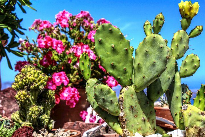 Cactus - Bentivoglio Photography
