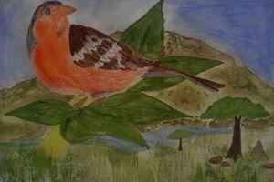 finch bird - CAM's art