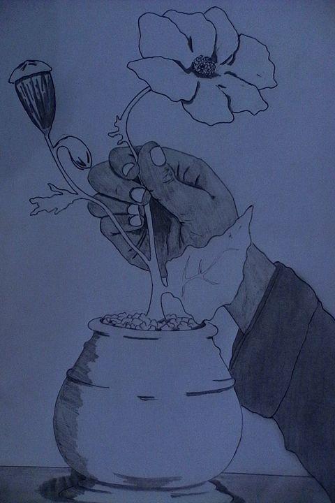 poppy flower - CAM's art