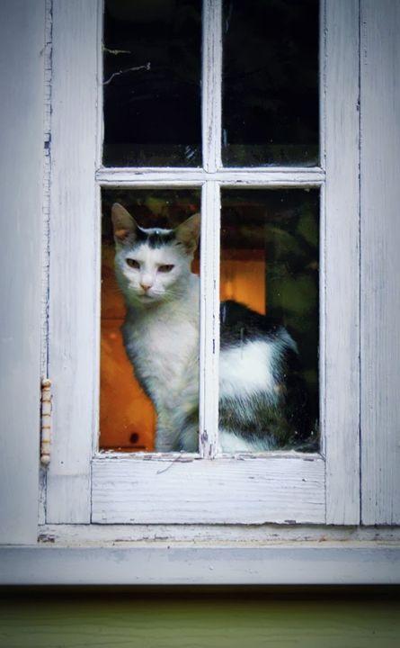 Murphy in the Window - Vita Vibrant