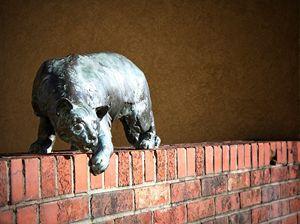 Cat Walk on Wall St. - Asheville, NC