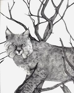 Bobcat - MLC Creations