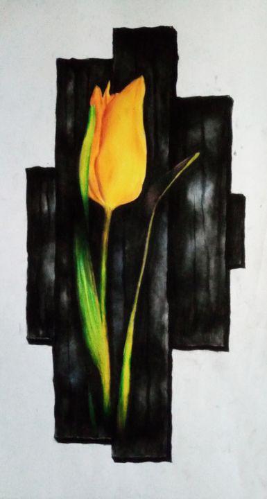 A tulip - Sohel