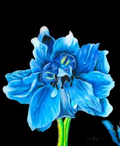 Blue delphinium - Mark's Art