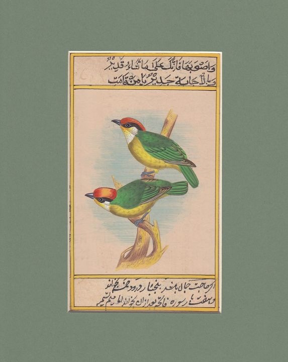 Pair of Barbets - Indian Inc.