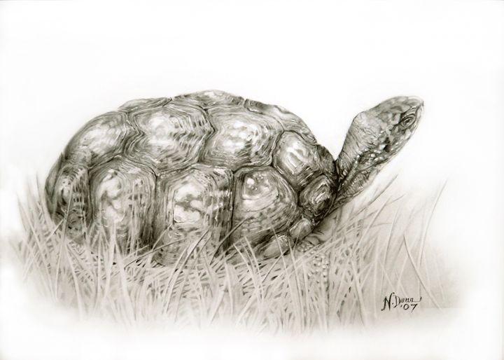 Turtle - Sit'N'PrettyPets