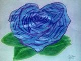 Heart Shaped Blue Rose Drawing 8x11