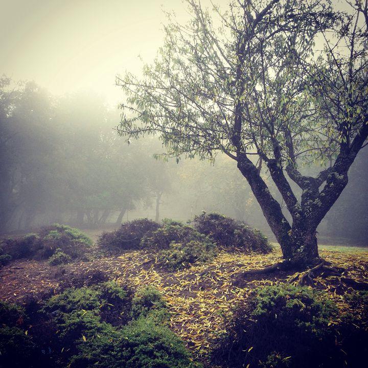 Foggy Mornings - C. L. Bell
