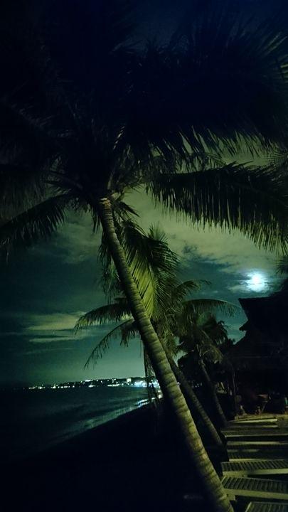 Midnight palm dream - Straps