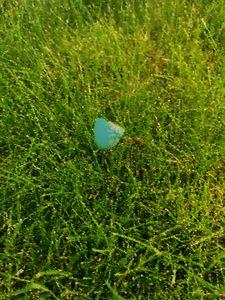 Robin's Egg Broken - Nicole Pomert