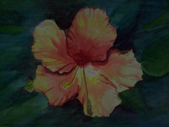 Hibiscus - Antoinette Parker