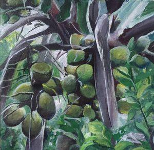 Coconuts - Jud's Art World