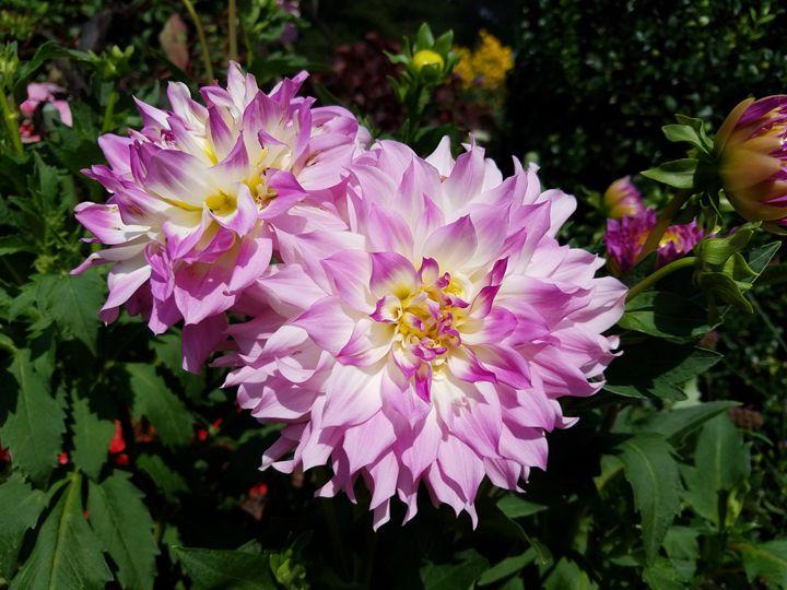 Flower of Life - Ethans Art