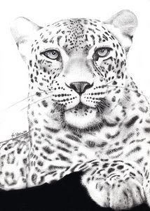 Prince of the Serengeti