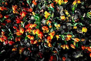 German 🇩🇪 flowers