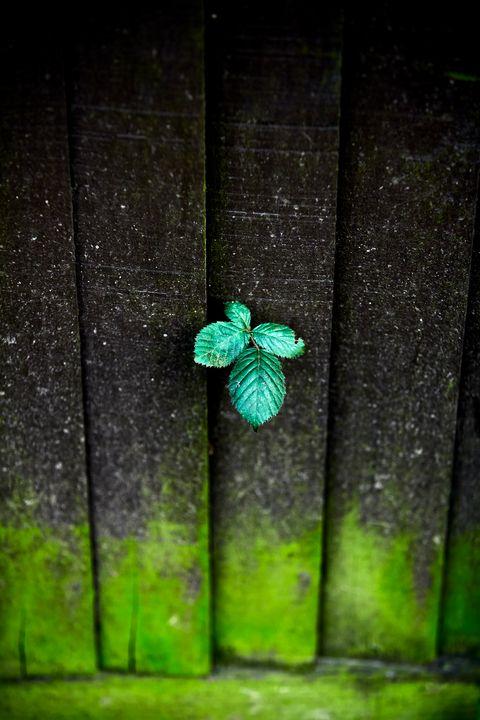 Shy plant 🌱. - Carlos Perez